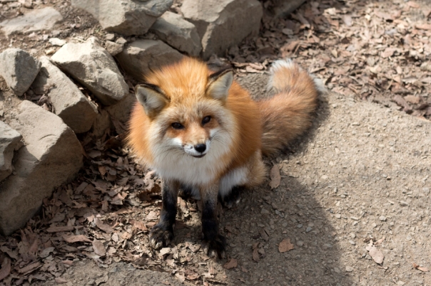 If there's any fox I'd abduct, it's this one.