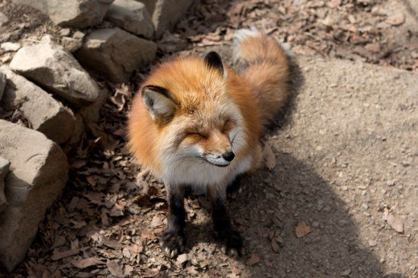 And have a lot of foxes come up to inform you that they're cute.